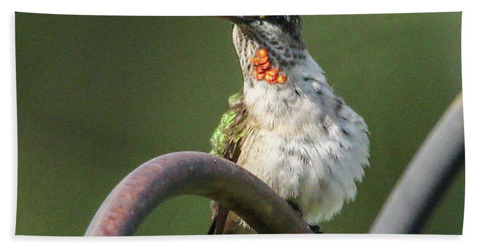 Green Bird Hand Towel featuring the photograph Ruby-throated Hummingbird by Jo Anne Keasler
