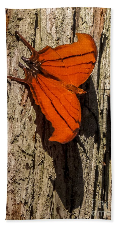 Audubon Hand Towel featuring the photograph Ruddy Daggerwing 1 by Nancy L Marshall
