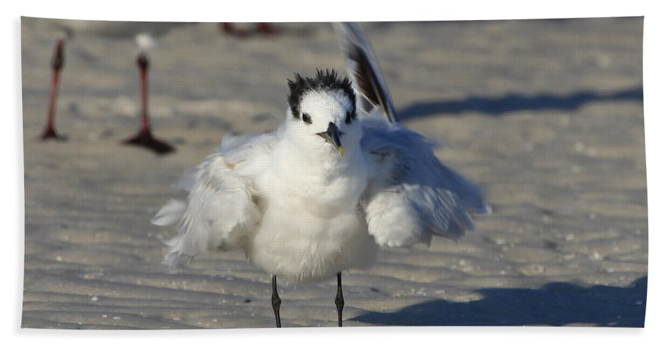 Gull Tern Bath Sheet featuring the photograph Ruffled Feathers by Barbara Bowen