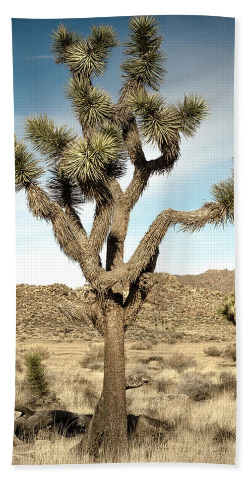 Joshua Tree Hand Towel featuring the photograph Rugged Joshua Tree by Alex Snay