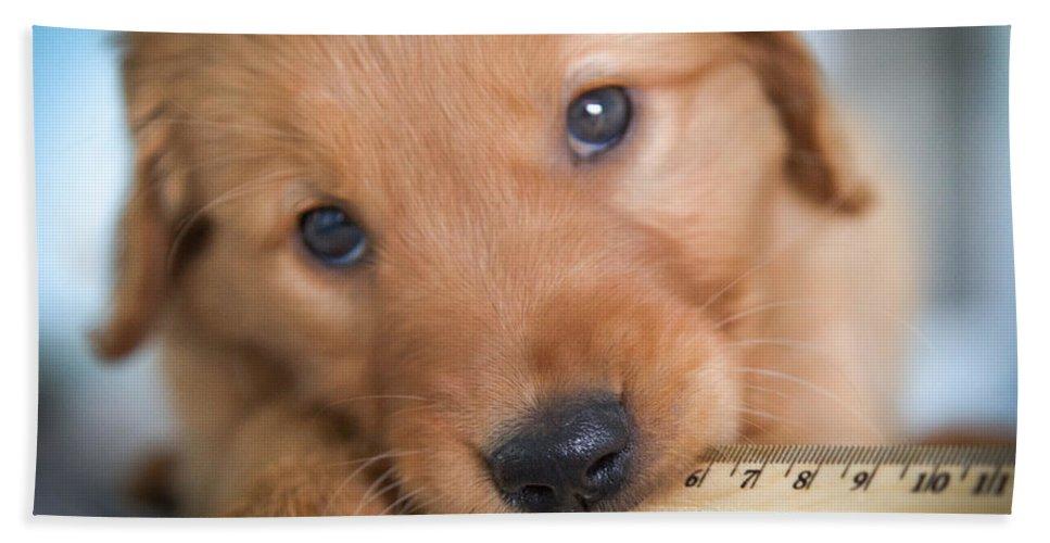 Golden Retriever Puppies Hand Towel featuring the photograph Ruler Of My Heart by Karen Wiles