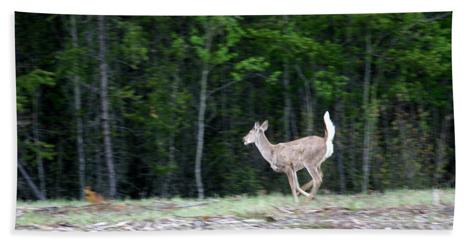 Deer Whitetail Doe Running Wild Nature Bath Sheet featuring the photograph Running Deer by Andrea Lawrence