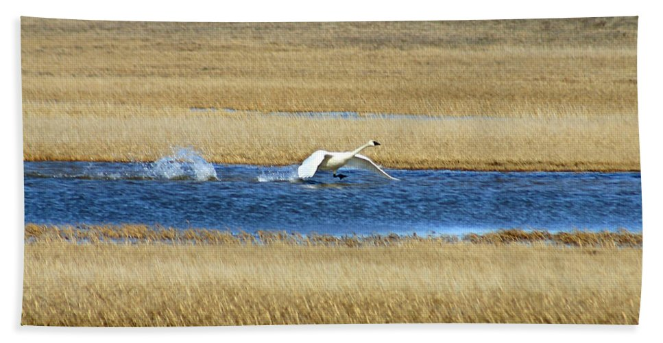 Swan Hand Towel featuring the photograph Running On Water by Anthony Jones