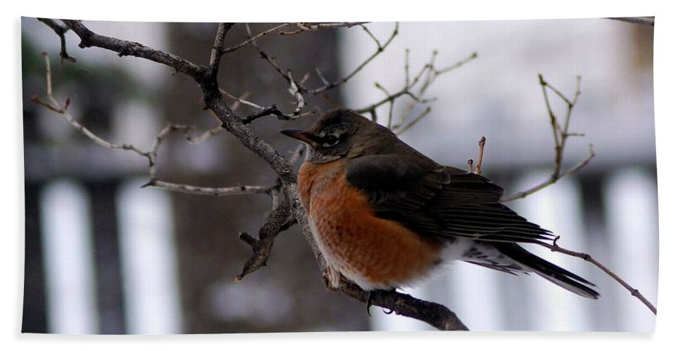 Nature Hand Towel featuring the photograph Rusty by Tracey Vivar