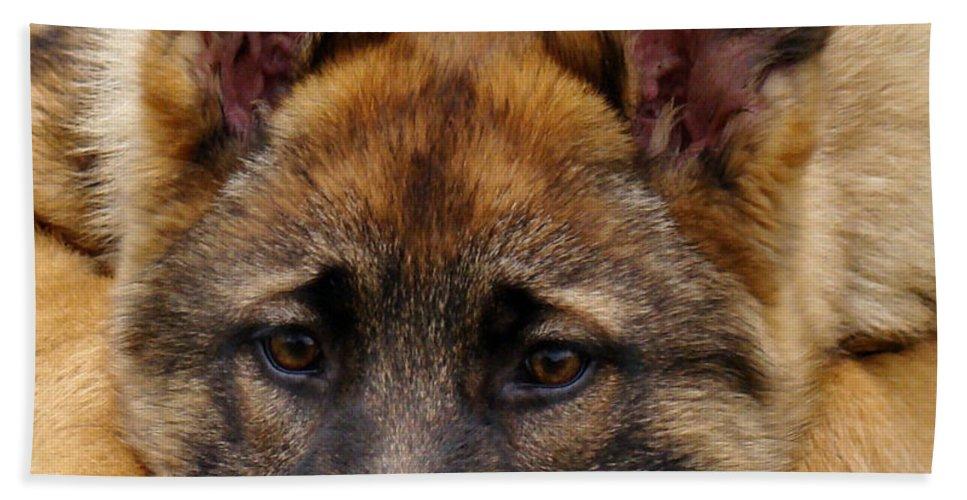 German Shepherd Bath Sheet featuring the photograph Sable German Shepherd Puppy by Sandy Keeton