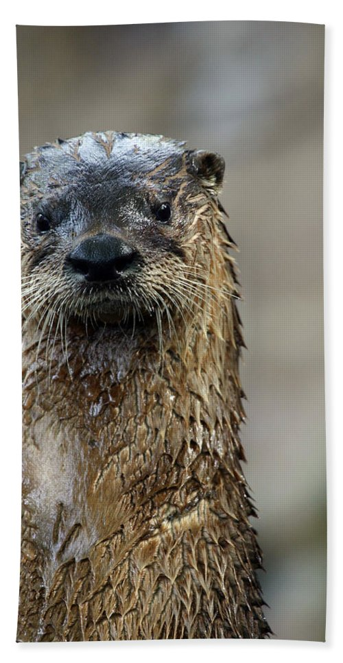 Otter Bath Sheet featuring the photograph Sad Looking by Karol Livote