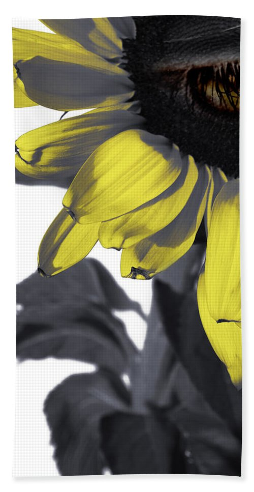 Sad Bath Sheet featuring the photograph Sad Sunflower by Kelly Jade King