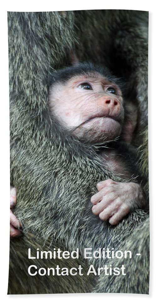 Olive Baboon Hand Towel featuring the photograph Safe In Mother's Arms by David Beebe