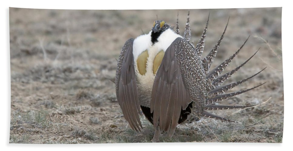Grouse Hand Towel featuring the photograph Sage Grouse by Gary Beeler