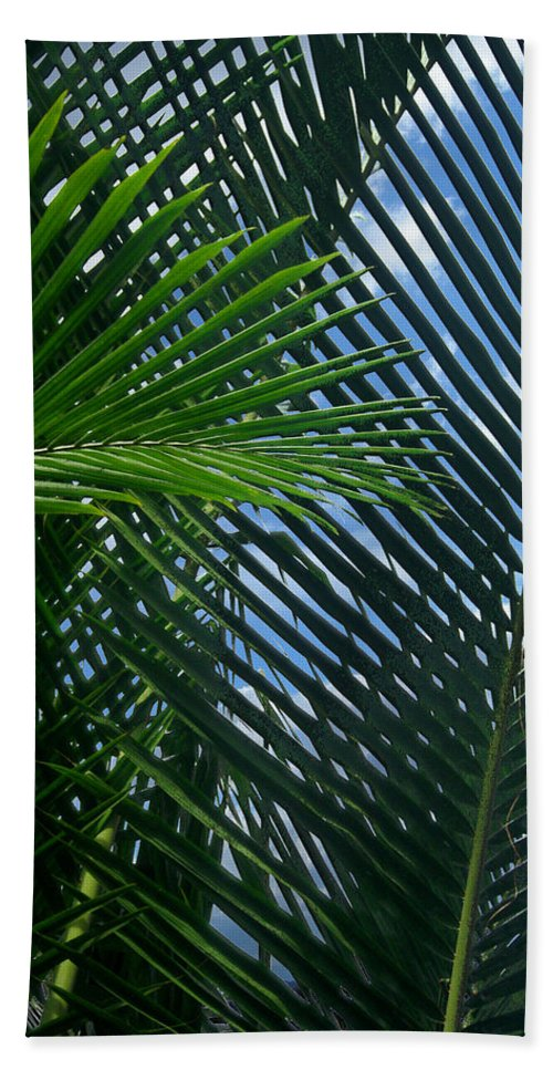 Indonesia Bath Sheet featuring the photograph Sago Palm Fronds by Mark Sellers
