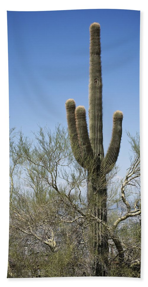 Saguaro Bath Sheet featuring the photograph Saguaro 8 by Kelley King