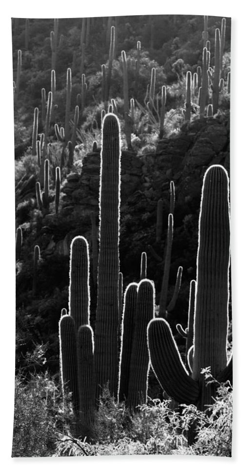 Black And White Hand Towel featuring the photograph Saguaro Backlit Black And White by Jill Reger