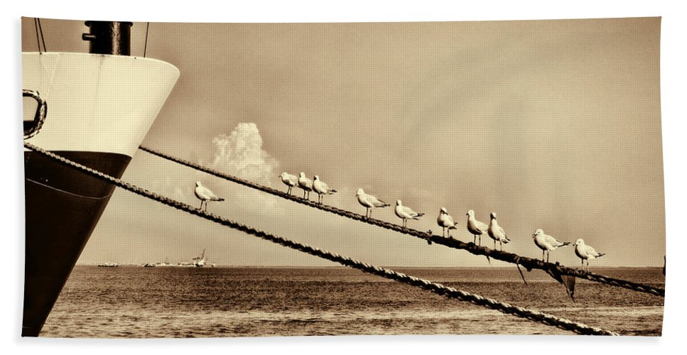 Seagulls Hand Towel featuring the photograph Sailors V2 by Douglas Barnard