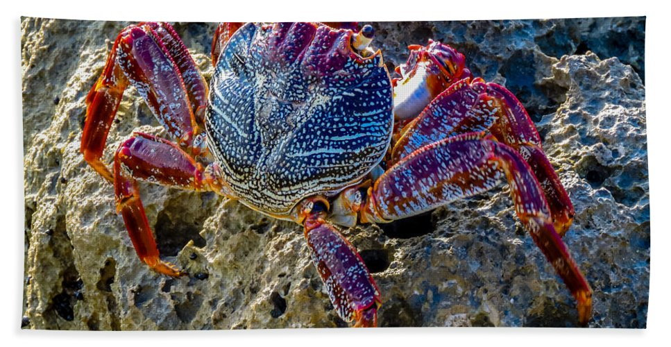 Florida Hand Towel featuring the photograph Sally Lightfoot Crab 1 by Nancy L Marshall