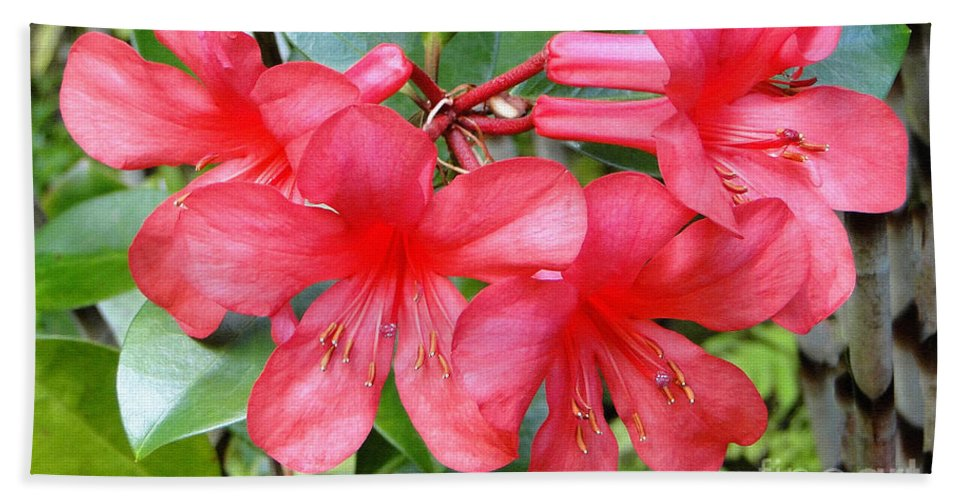 Flower Bath Sheet featuring the photograph Salmon Pink In The Tropics by Sue Melvin