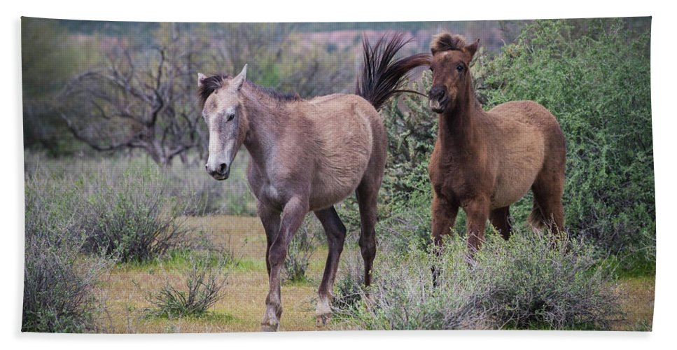 Salt Hand Towel featuring the photograph Salt River Wild Horses-img_747217 by Rosemary Woods-Desert Rose Images