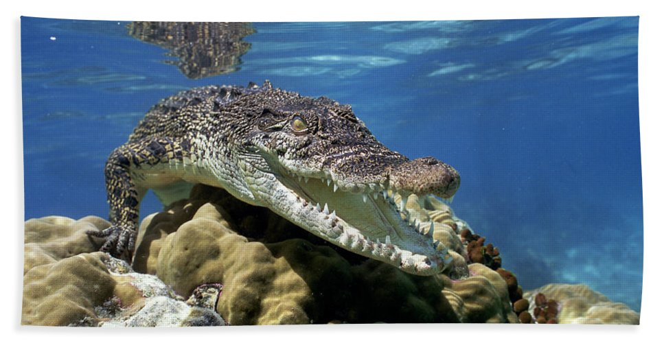 Mp Hand Towel featuring the photograph Saltwater Crocodile Smile by Mike Parry