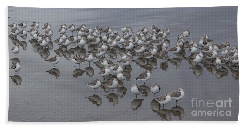 Peeps Hand Towel featuring the photograph Sanderlings On The Shore by Kris Hiemstra