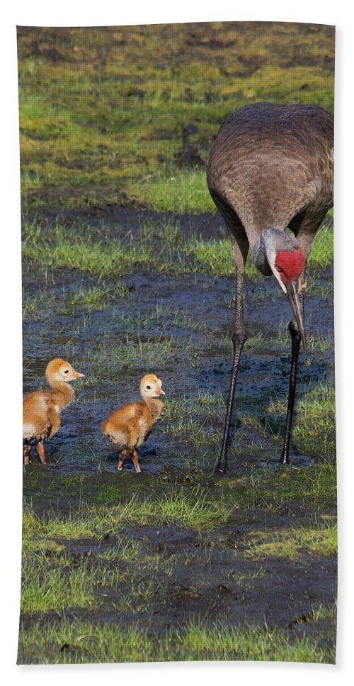 Sandhill Cranes Bath Sheet featuring the photograph Sandhill Crane And Babies by Richard Rizzo