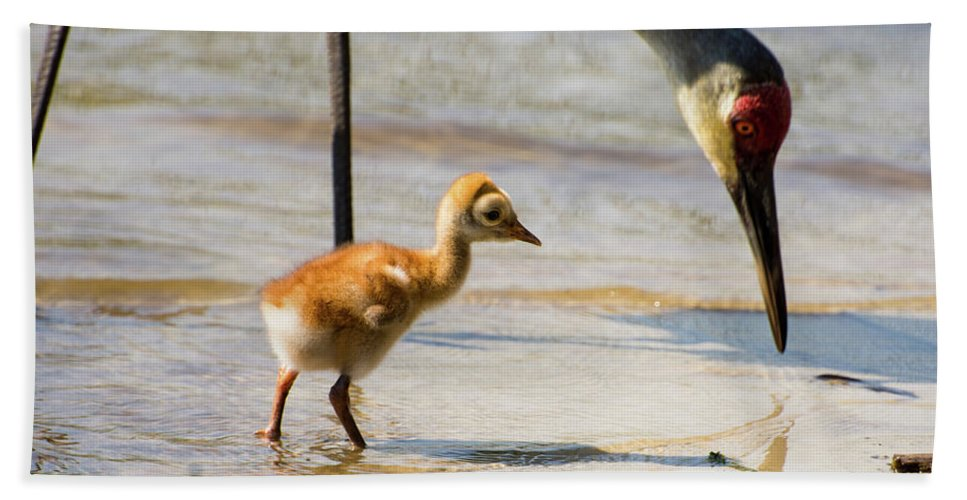 Sandhill Cranes Bath Sheet featuring the photograph Sandhill Crane With Chick by Zina Stromberg