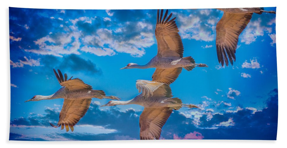 Sandhill Cranes Hand Towel featuring the photograph Sandhill Cranes by Larry White