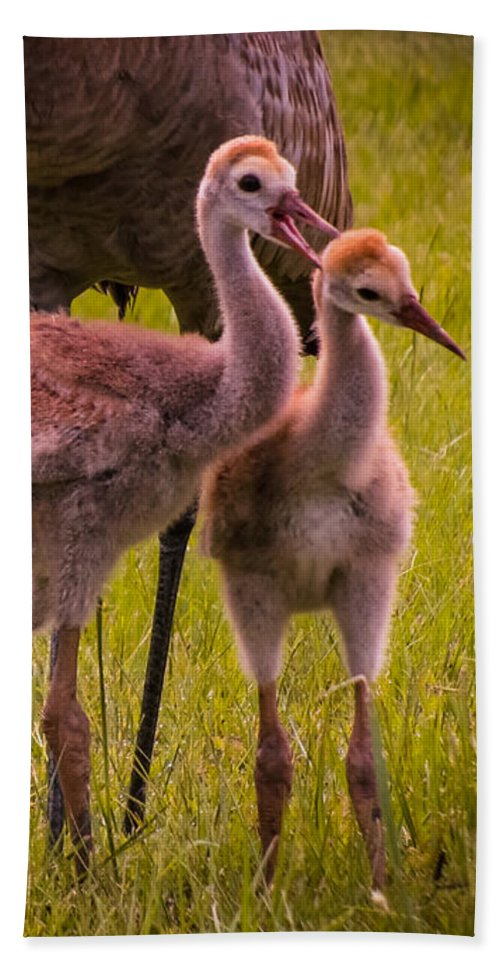Sandhill Cranes Bath Sheet featuring the photograph Sandhill Cranes Playing by Zina Stromberg