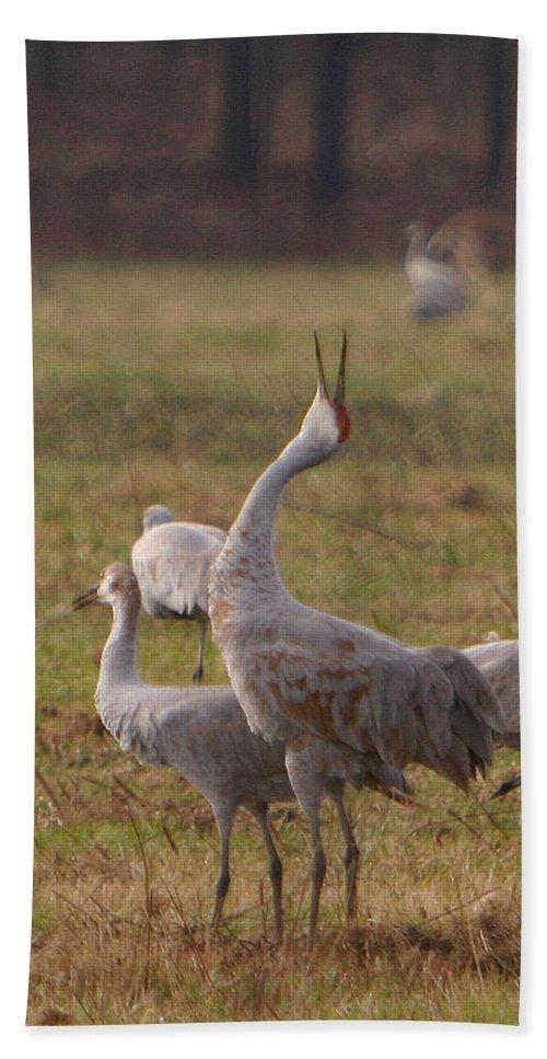 Sandhill Crane Birds Mating Calliing Nature Wildlife Photography Photograph Hand Towel featuring the photograph Sandhill Delight by Shari Jardina