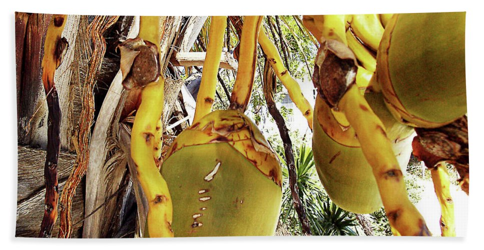 Florida Bath Sheet featuring the photograph Sanibel Coconuts Gp by Chris Andruskiewicz