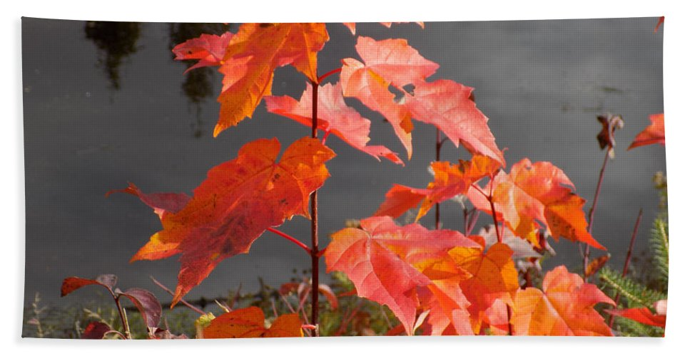 Maple Tree Hand Towel featuring the photograph Sapling By The Pond by William Tasker