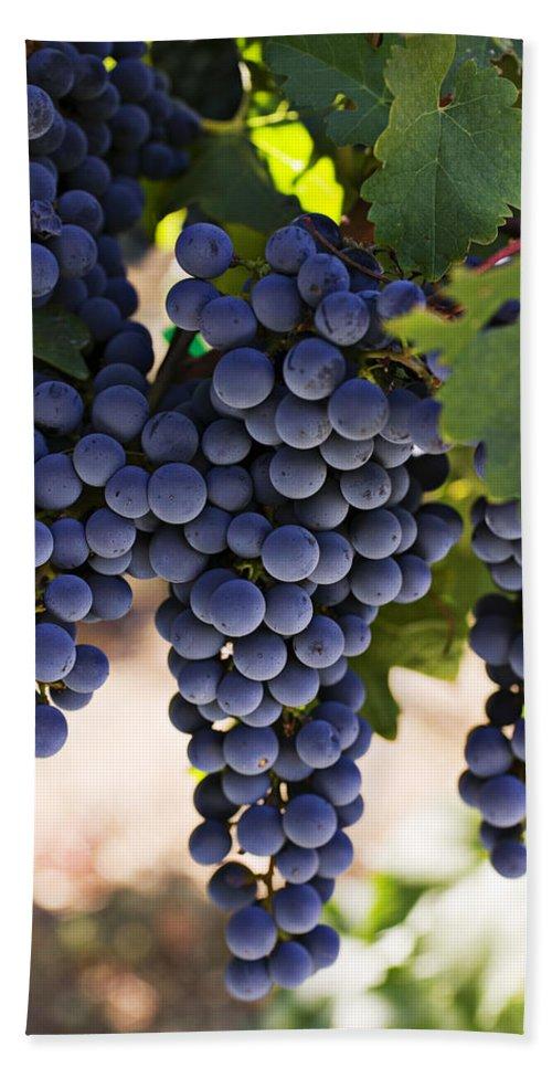 Sauvignon Bath Sheet featuring the photograph Sauvignon Grapes by Garry Gay