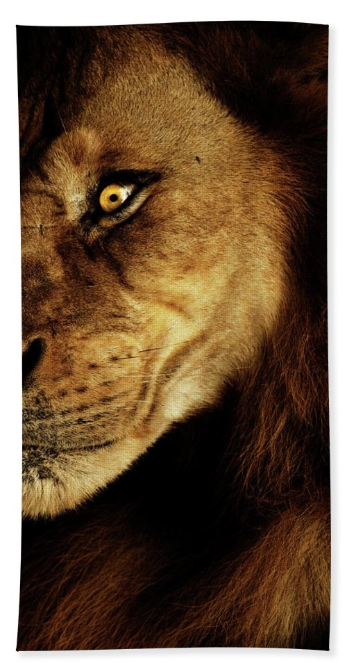Lion Hand Towel featuring the photograph Savage by Andrew Paranavitana