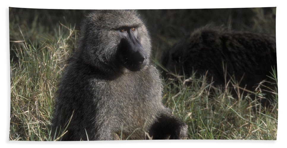 Baboon Hand Towel featuring the photograph Savannah Olive Baboon by Sandra Bronstein