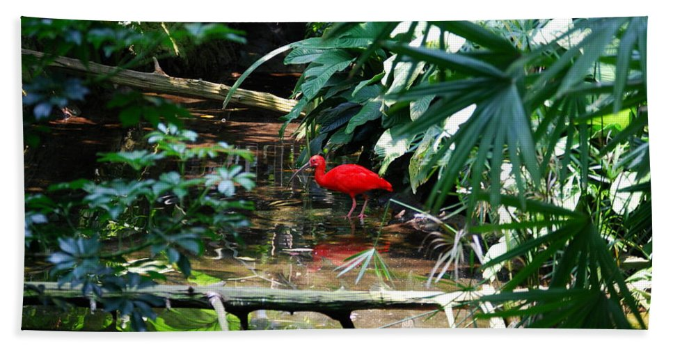Scarlet Ibis Bath Sheet featuring the photograph Scarlet Ibis by Eric Liller