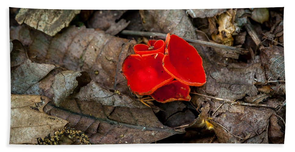 Fungus Bath Sheet featuring the photograph Scarlet Underfoot by Jeff Phillippi