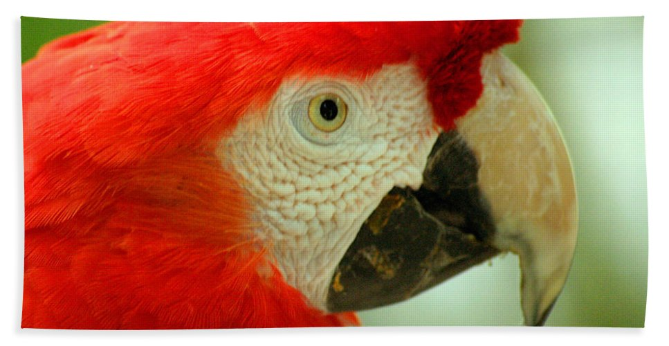 Parrot Bath Towel featuring the photograph Scarlett Macaw South America by Ralph A Ledergerber-Photography