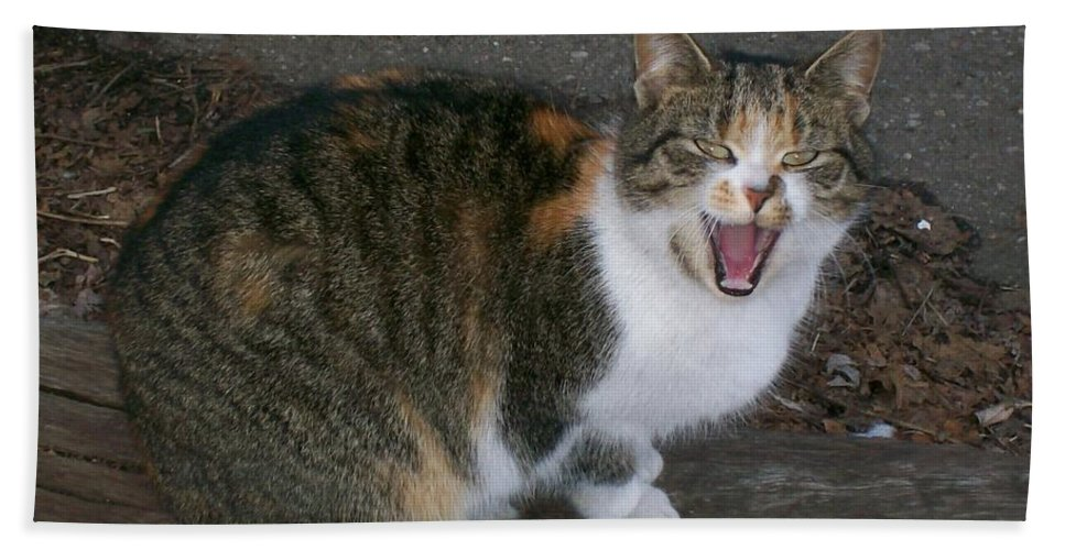 Cat Bath Sheet featuring the photograph Scary Kitty by Sara Raber