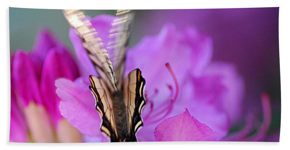 Butterfly Bath Sheet featuring the photograph Scissorwings by Susan Capuano