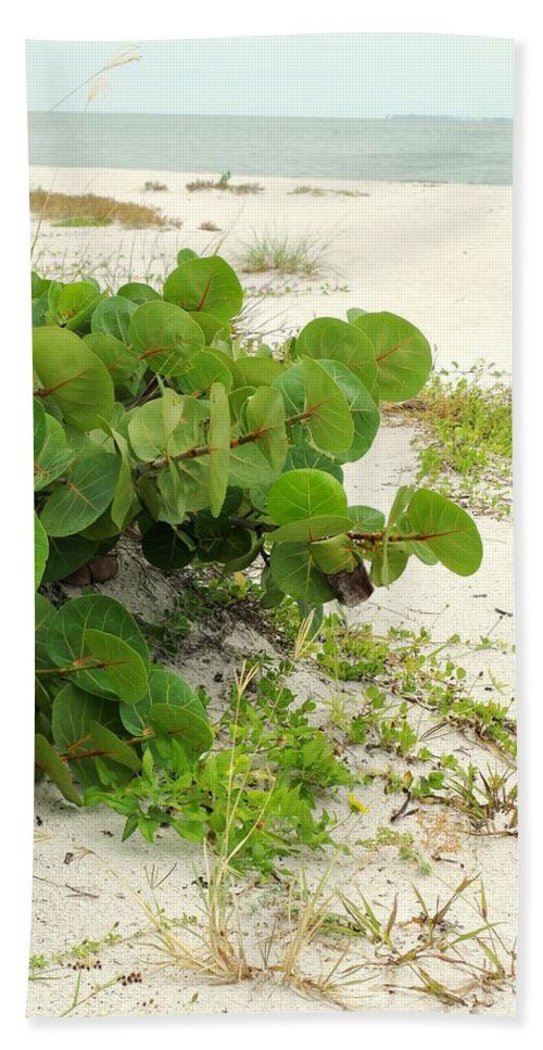 Florida Bath Sheet featuring the photograph Sea Grapes by Ian MacDonald