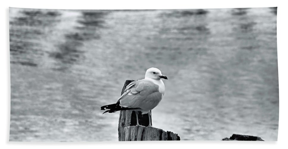 Sea Gull Hand Towel featuring the photograph Sea Gull Black And White by Elizabeth Dow