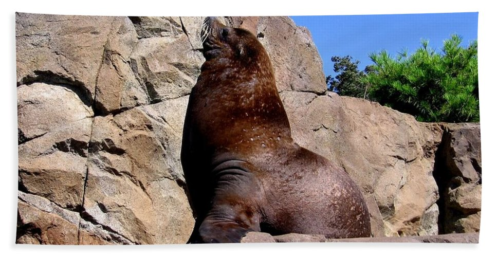 Sealions Hand Towel featuring the photograph Sea Lion by Rose Santuci-Sofranko