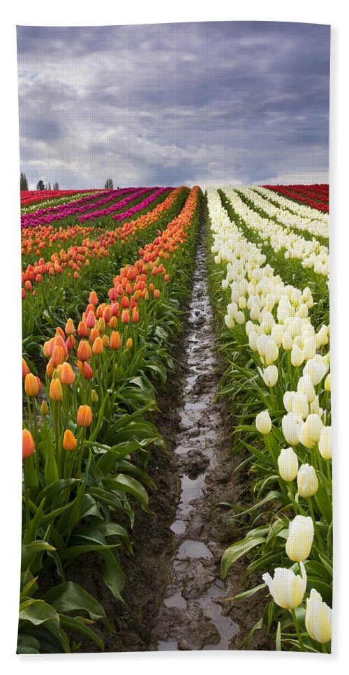 Tulips Bath Towel featuring the photograph Sea Of Color by Mike Dawson