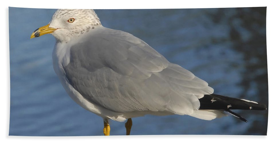 Seagull Hand Towel featuring the photograph Seagull by David Lee Thompson