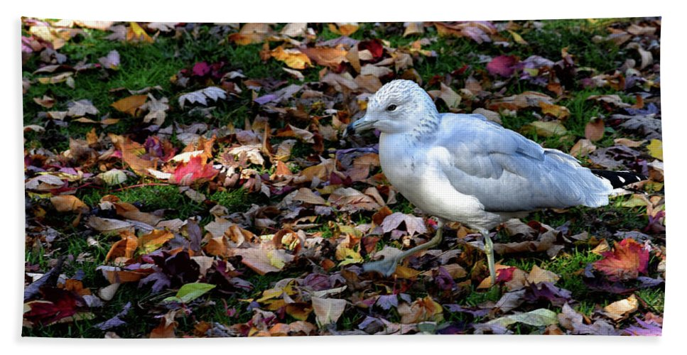 Autumn Bath Towel featuring the photograph Seagull In The Fallen Leaves by Maria Keady