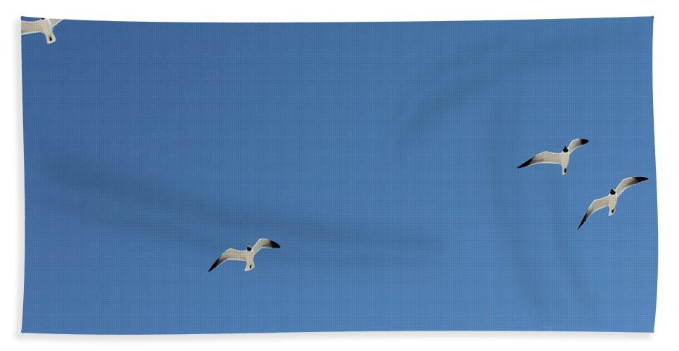 Blue Hand Towel featuring the photograph Seagulls 6 by Laura Martin