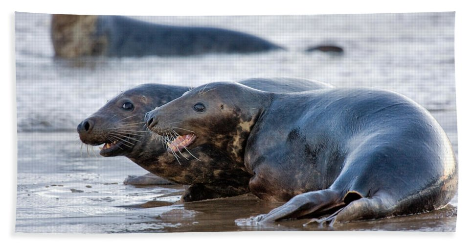 Animals Hand Towel featuring the photograph Seals by Louise Heusinkveld