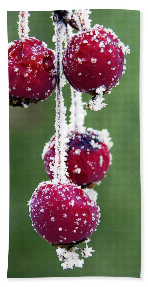 Berries Hand Towel featuring the photograph Seasonal colors by Marilyn Hunt