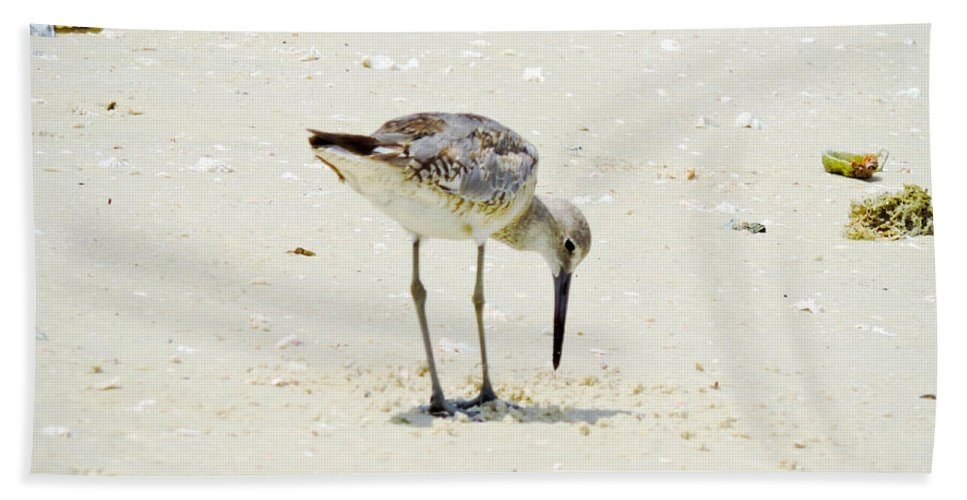 Plover Bath Sheet featuring the photograph Searching Plover by Marilee Noland