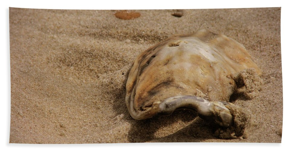 Ocean Bath Sheet featuring the photograph Seashells At The Seashore by JAMART Photography