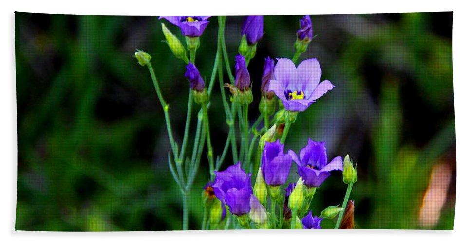 Seaside Gentian Wildflower Bath Sheet featuring the photograph Seaside Gentian Wildflower by Barbara Bowen