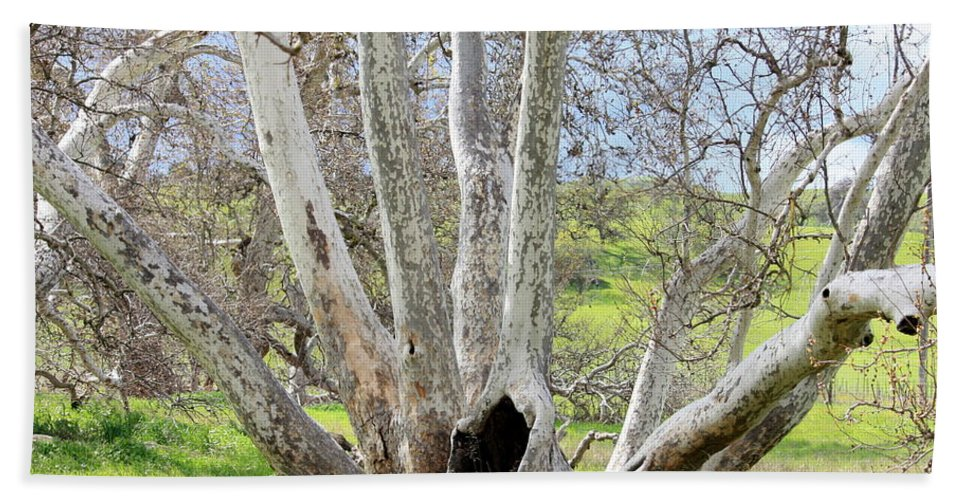 Tree Bath Sheet featuring the photograph Secret Passageway by Carol Groenen